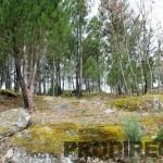 PD0005 - Quinta de Lagares