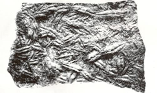 Bilobites
