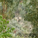 Large valley for sale Góis area - PD0012 - **No loger available for sale**