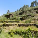 PD0077 - Vale da Picota