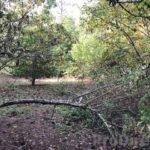 Quinta da Nogueira - PD0322 - NO LONGER FOR SALE